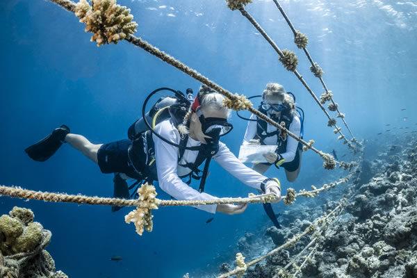 Coral Lines - ©COMO Cocoa Island, Maldives