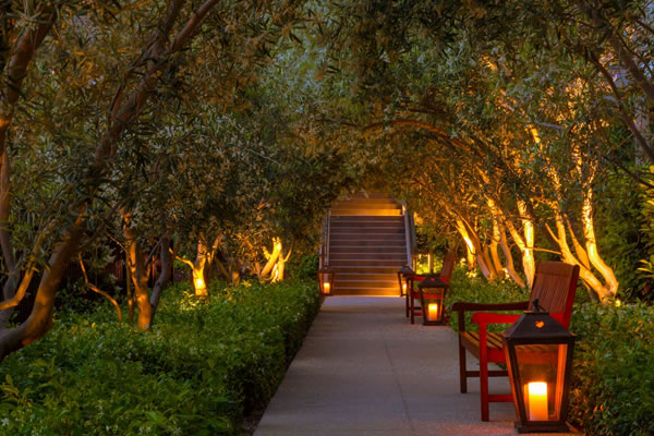 Olive Tree Garden Path -©Rosewood Sand Hill, Menlo Park