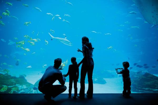 Georgia Aquarium Family Package at The Ritz-Carlton, Atlanta
