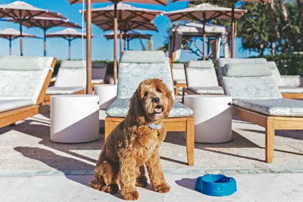 Fort the Therapy Dog-©Four Seasons Resort Palm Beach