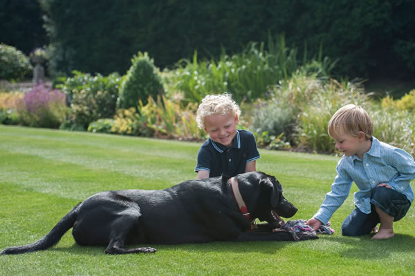 Doggy Playtime - ©Four Seasons Hotel Hampshire
