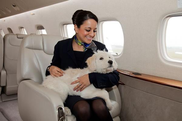 Family Dog with Hostess -©PrivateFly.com