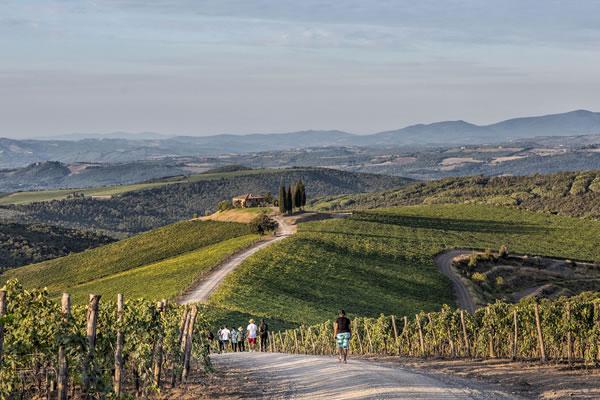 Walk in the Vineyards - ©Rosewood Castiglion Del Bosco, Tuscany