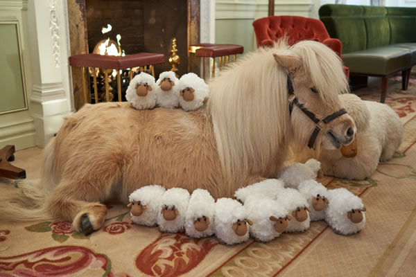 Teddy the Shetland Pony with plush sheep at The Goring -©Adam Lynk Photography