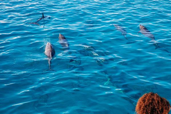 Soneva Academy Marine Life ©Soneva Fushi Maldives