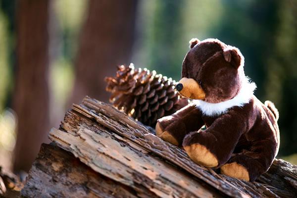 Plush Bear ®The Ritz-Carlton, Lake Tahoe