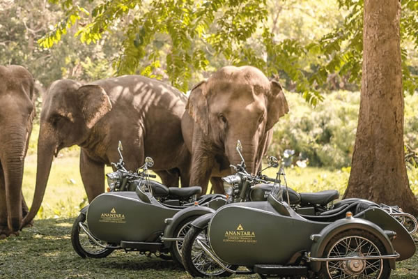 Cruise Past Elephants in a Sidecar ©Anantara Golden Triangle Elephant Camp & Resort