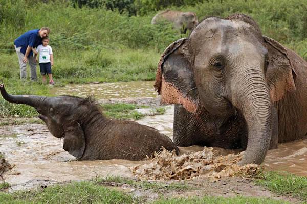 Elephant Camp ©Anantara Golden Triangle Elephant Camp & Resort