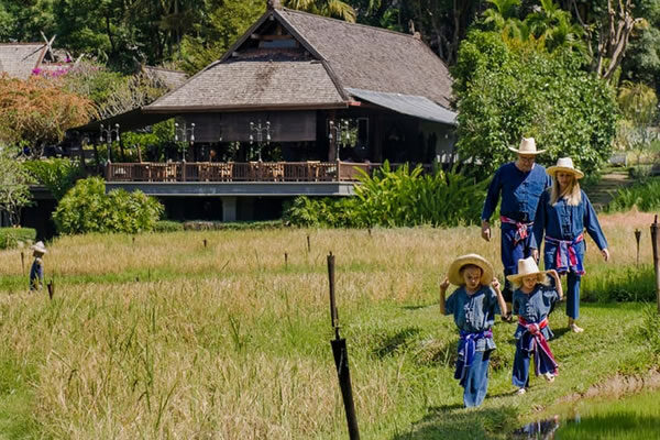 Mini Rice Planting Experience ©Four Seasons Resort Chiang Mai