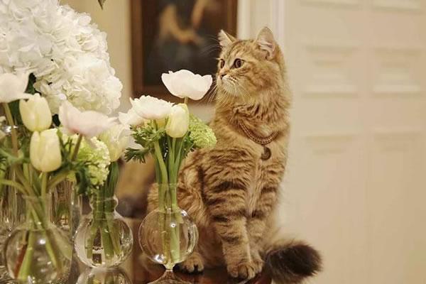 Lilibet the resident cat ©The Lanesborough, Oetker Collection